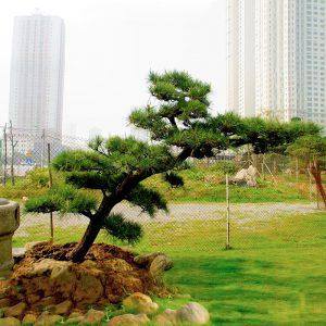 Vườn Nhật Hà Nội