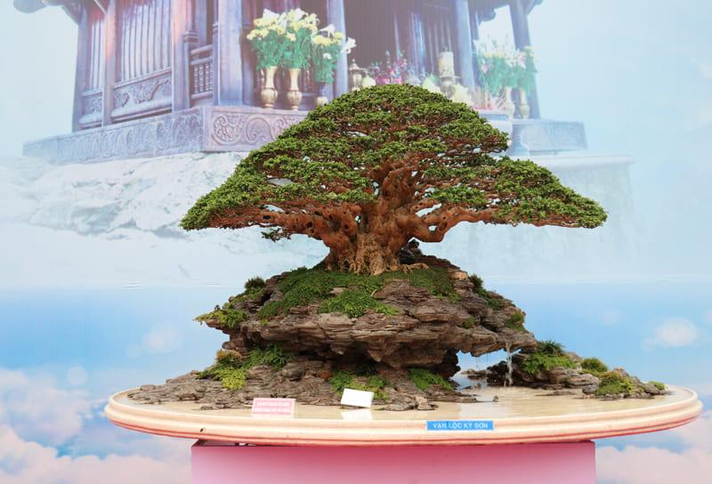 trien-lam-cay-canh-nghe-thuat-bonsai-11