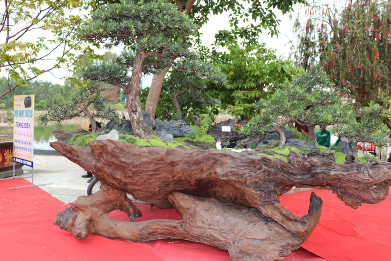 trien-lam-cay-canh-nghe-thuat-bonsai-13