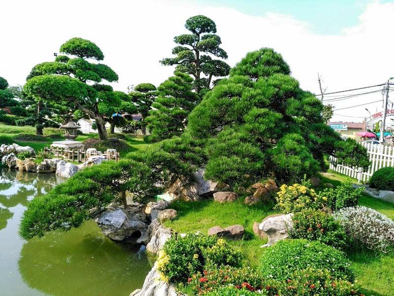 Ảnh cây cảnh đẹp - Bộ sưu tập hình ảnh cây cảnh tuyệt đẹp không nên bỏ qua