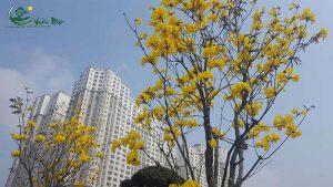 cay hoa phong linh